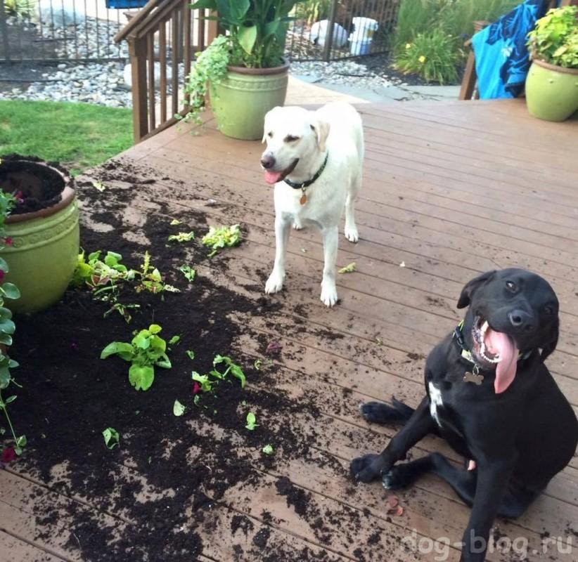собаки выкопали растения