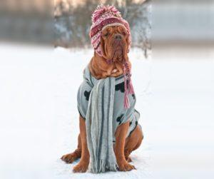 собака в зимней шапке