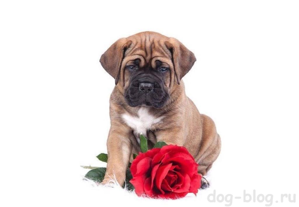 как щенок знакомится с собаками