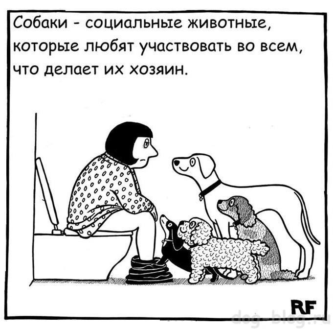 комикс про собаку и хозяина в туалете