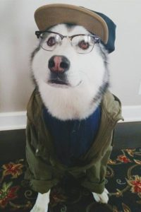 собака в шапке и очках