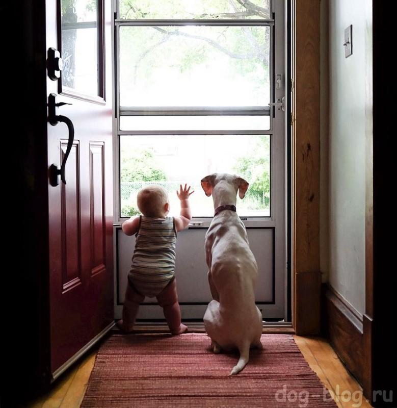 общение собак с детьми
