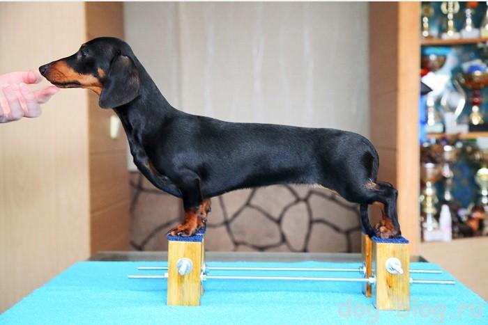 тренажер для собак для стойки
