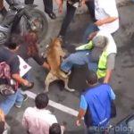 Видео о том, как толпа разнимает двух собак