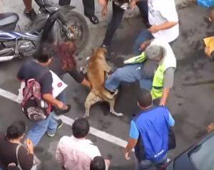 люди разнимают двух сцепившихся собак