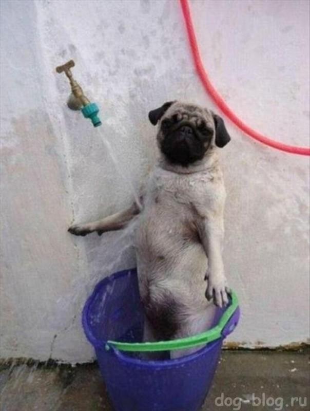 собака моется