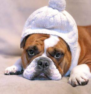печальная собака в шапке