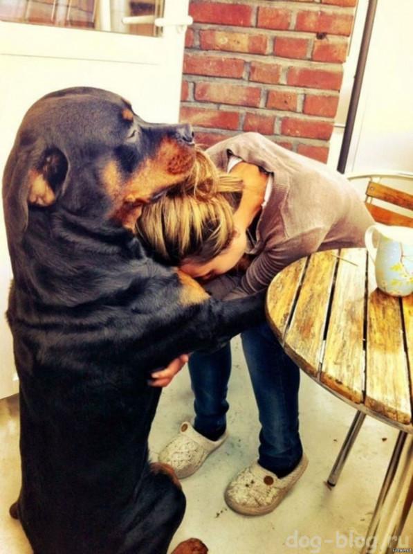 собака обнимает хрозяйку