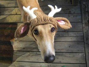 шапка-олень на собаке
