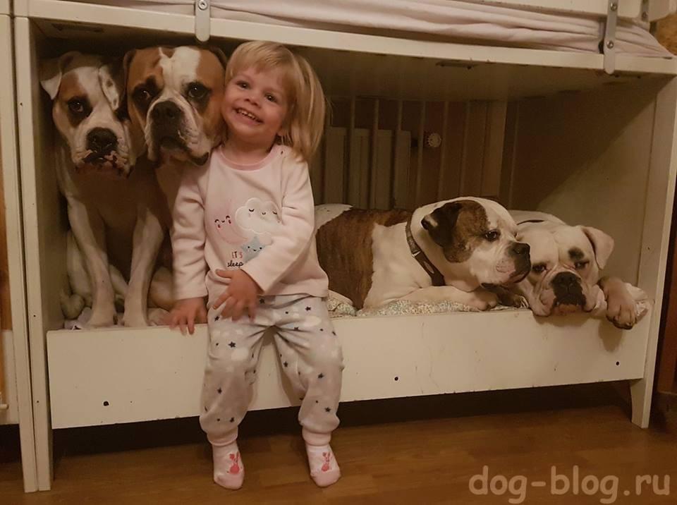 заведите собаку