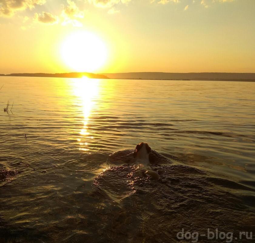 собака плавает