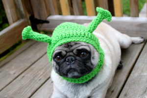 собака в шапке шрека