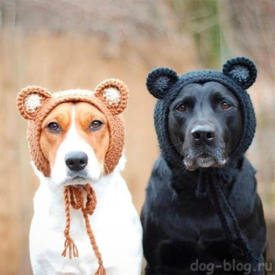 вязаные шапки на собаках