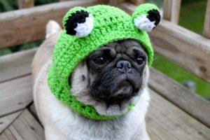 смешная вязаная шапка на собаке