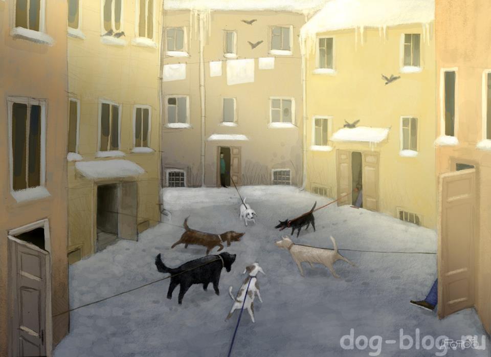 Попов - смешные картинки про собак