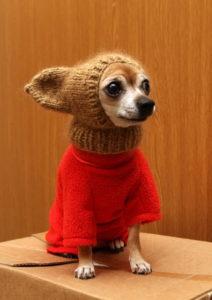 щенок в шапке