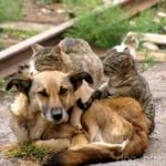 18 августа — всемирный день защиты бездомных животных