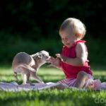 Дети и собаки: Азбука общения