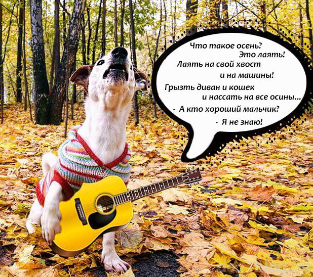 джек рассел терьер осень
