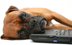 темы на собачьем форуме