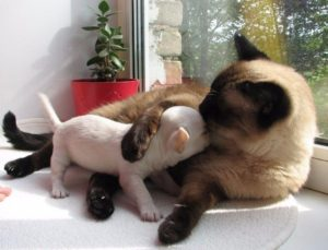 подружить собаку с кошкой