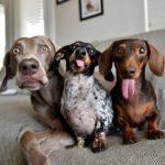 Жизнь одной собачьей семьи в фотографиях