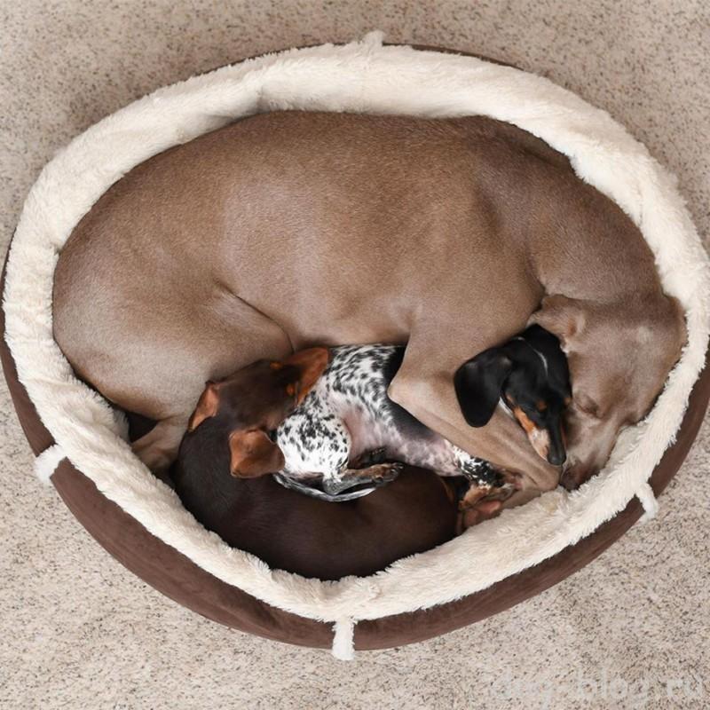 фото спящей собаки
