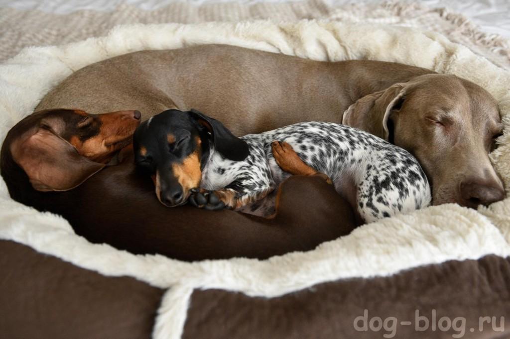 собаки спят фото