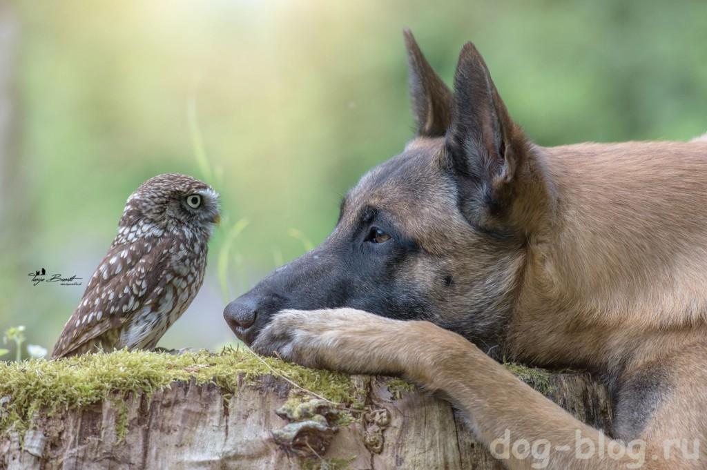 дружба собаки и совы