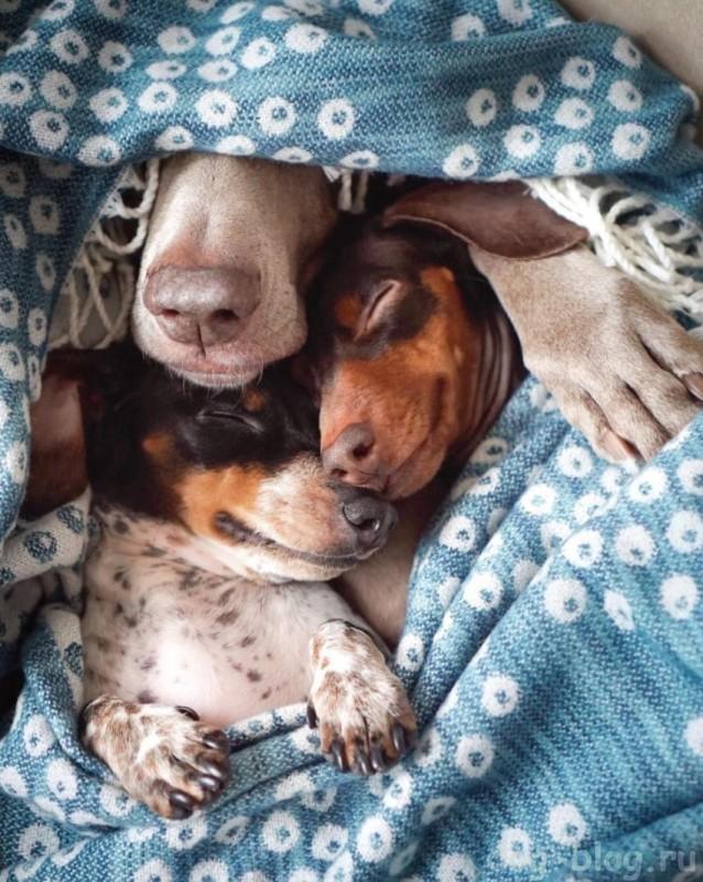 фото спящих собак