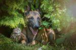 Трогательная дружба совы и собаки в фотографиях Татьяны Брандт