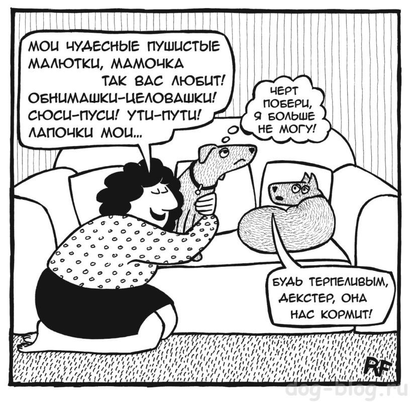 тест для хозяина собаки