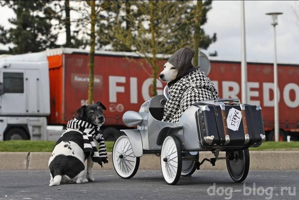собаки в пальто