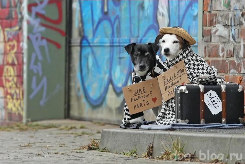 две собаки в пальто