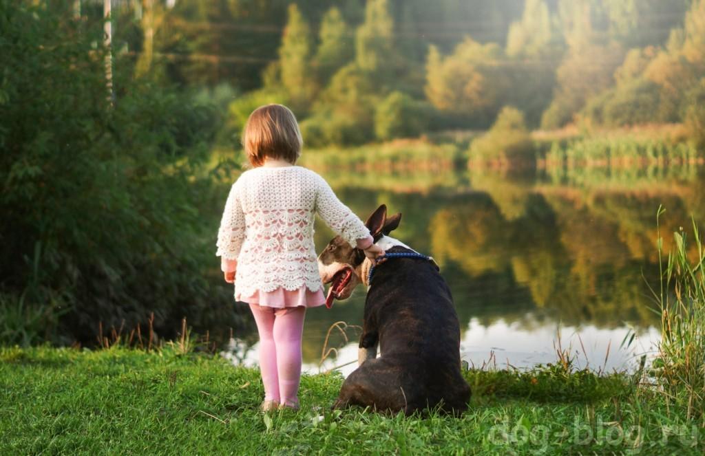 собака и новорожденный - друзья на всю жизнь!
