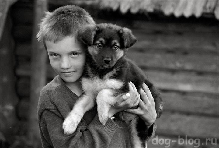 брошенный пёс