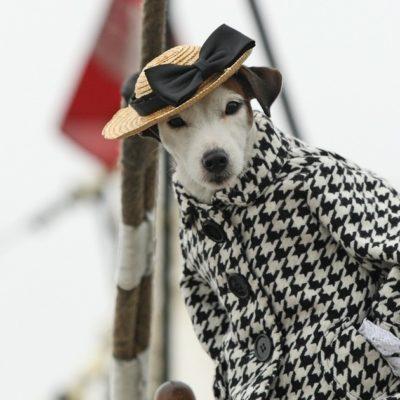 собака в пальто