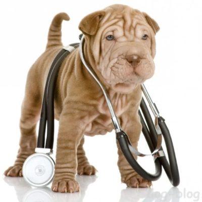 симптомы боли у собак