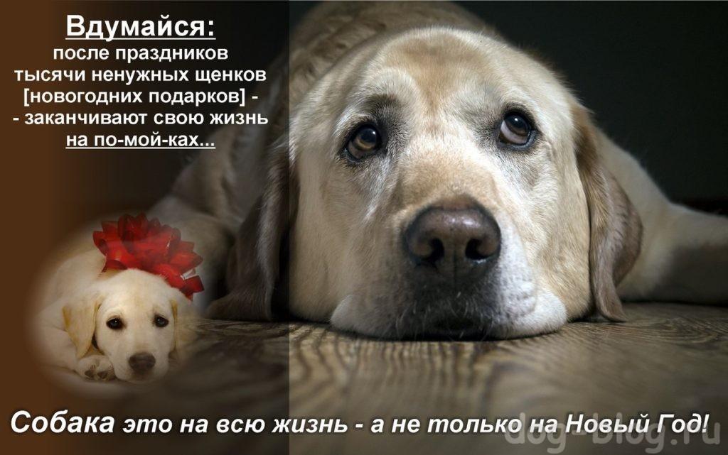 не надо дарить собаку на новый год