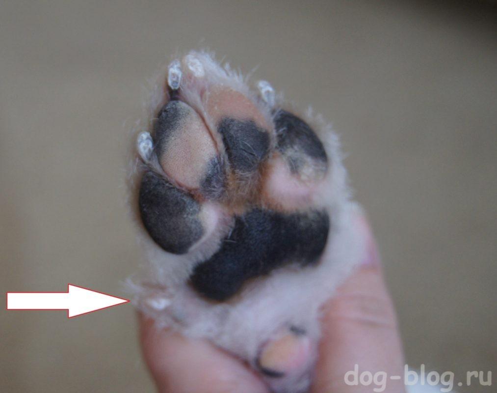 как правильно стричь когти собаке