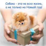 Пожалуйста, не дарите собак на Новый Год!..