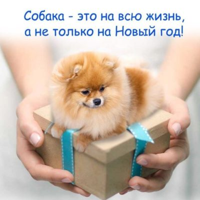 не дарите собаку на Новый год