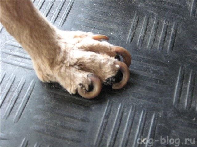 как стричь ногти собаке