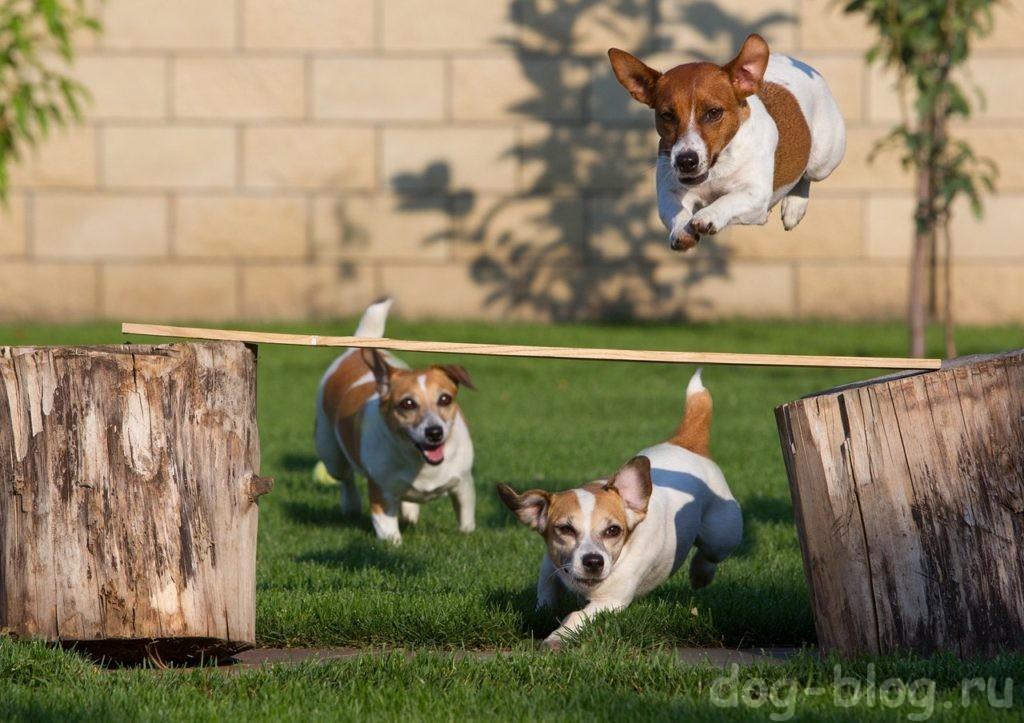 как похудеть собаке - играть с другими собаками