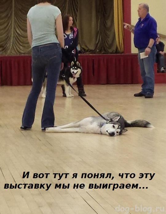 описание собаки экспертом