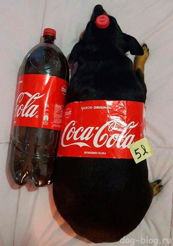 лишний вес у собак