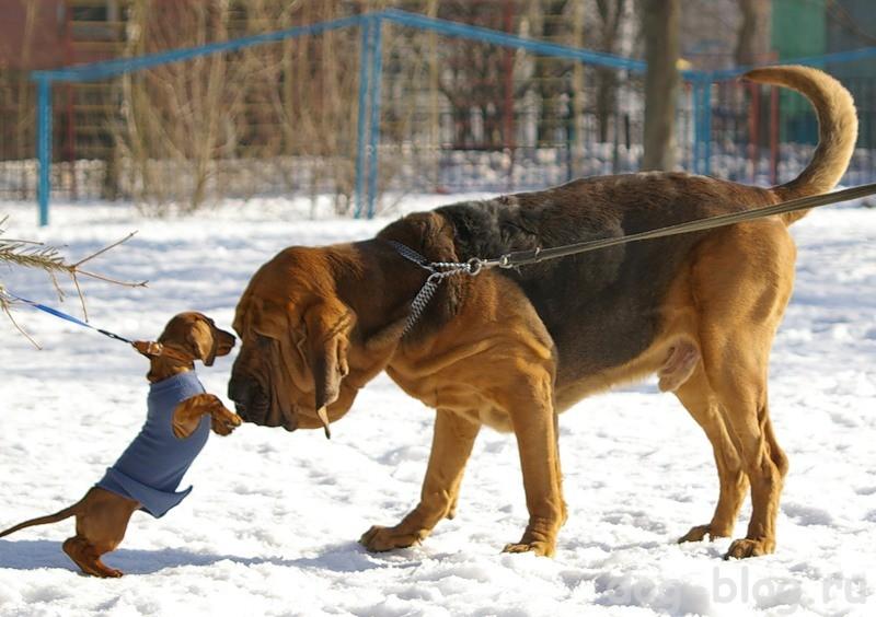 культура собаководства