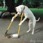 Культура собаководства. 15 правил