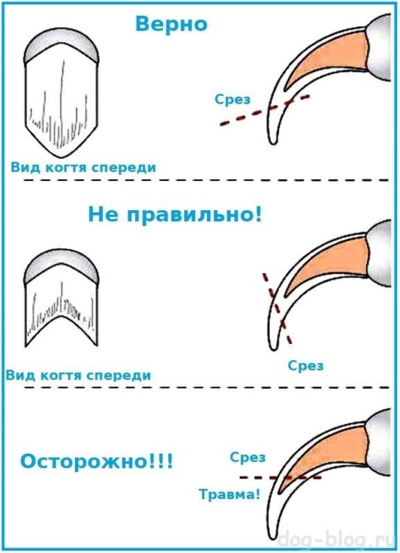 как стричь когти собаке - инструкция