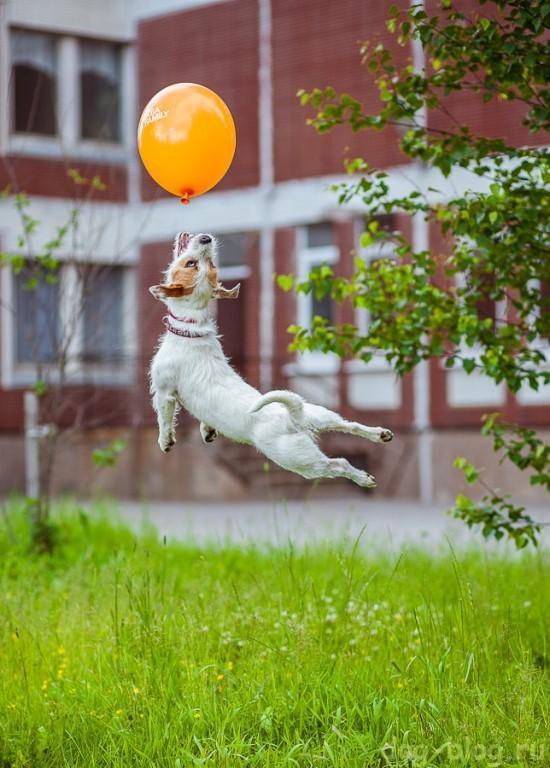 как похудеть собаке - прыгать
